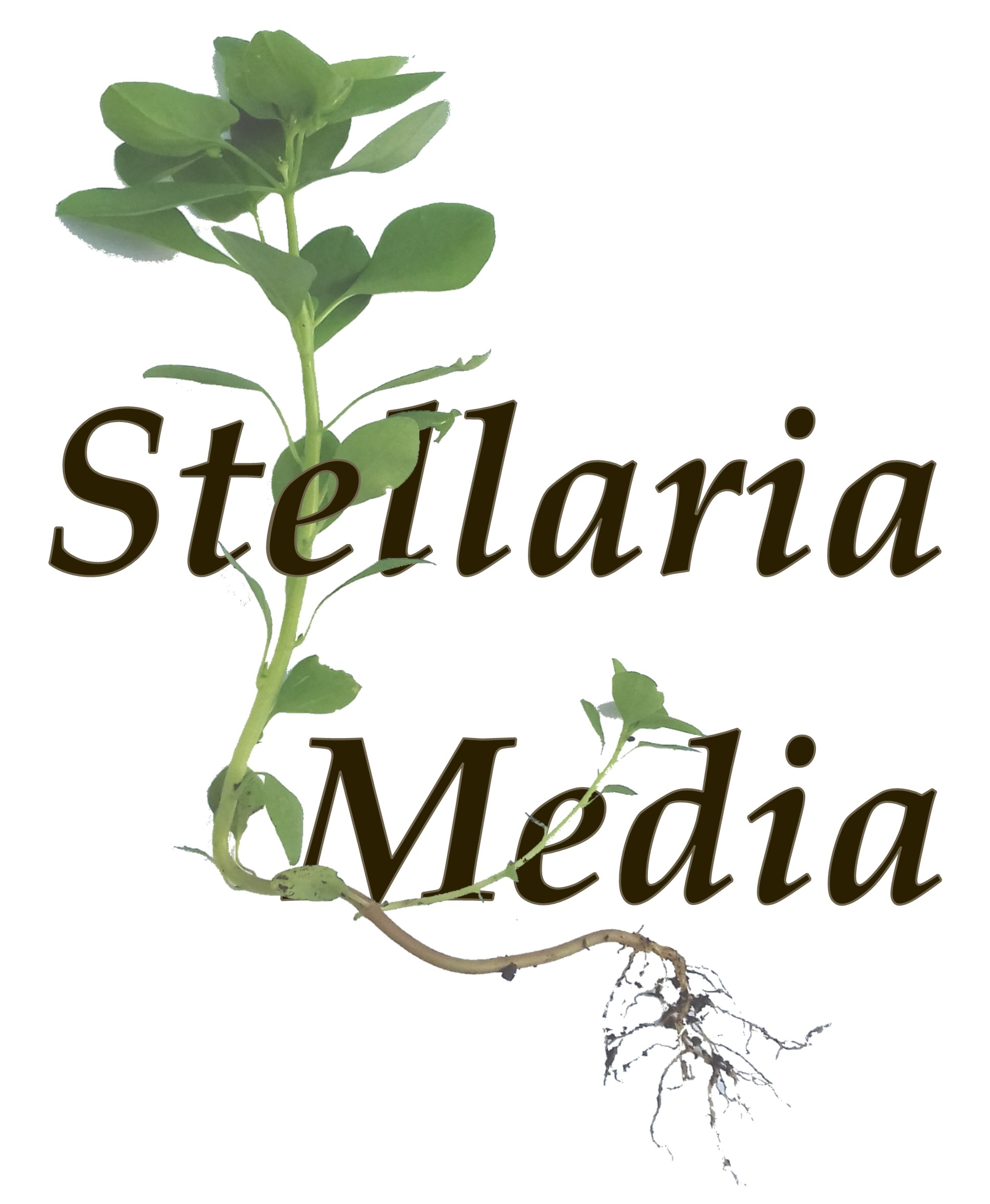 Stellaria Media